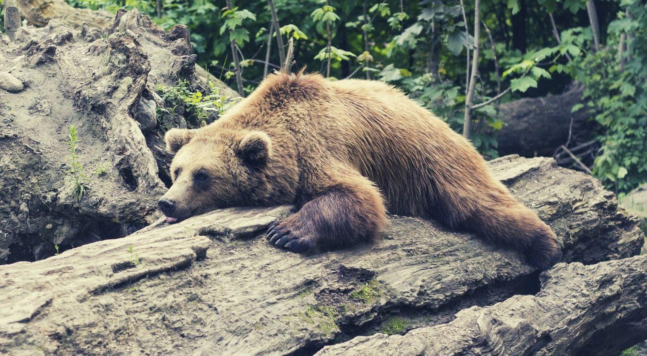 旭山動物園にいる動物で、あなたが生まれ変わったらなりたいのは?