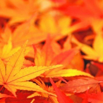 東京都内でも美しい紅葉が見られるスポットといえば?