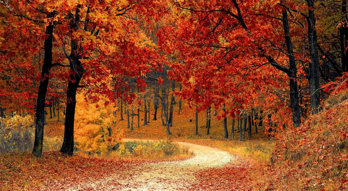 タイトルに「秋」とつく曲といえば?