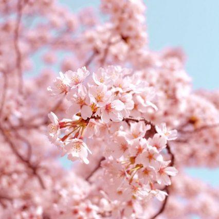 【別れと出会いの季節】春に聞きたくなるジャニーズの名曲といえば?