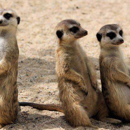 一番面白いと思う3人組お笑い芸人といえば?