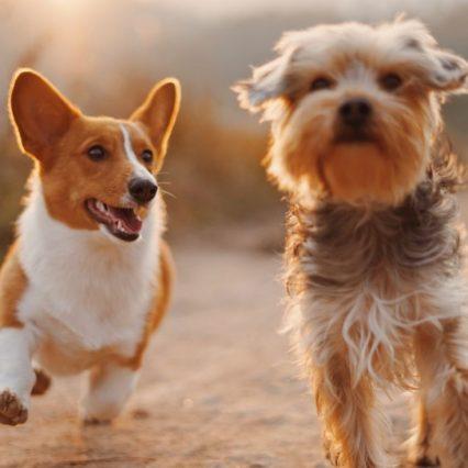 結局のところ、1番好きな犬種は?