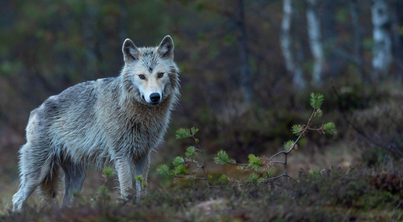 人狼ゲームで好きな役職は?