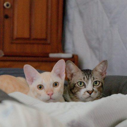 結局1番好きな猫の種類といえば?
